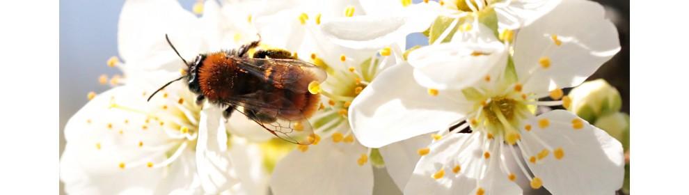 24b51fa4a4e4f9 PIORiN: Bezpieczne dla pszczół stosowanie środków ochrony roślin ...